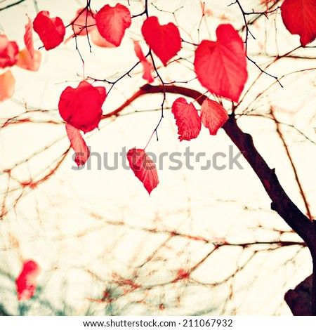 Pink coral autumn leafs over sepia vintage background  - stock photo