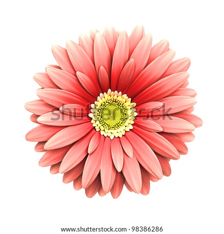 Pink daisy flower isolated on white background - 3d render