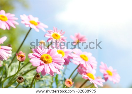 Pink daisy in front of blue sky with flowers - stock photo