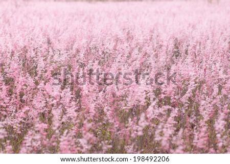 Pink field  - stock photo