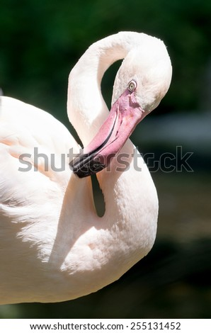 Pink flamingo close up - stock photo