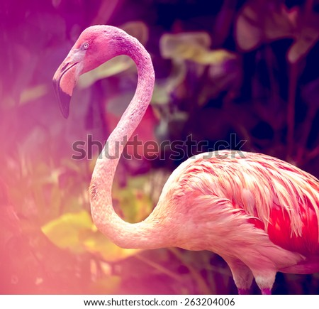 Pink flamingo close-up in Singapore zoo - stock photo