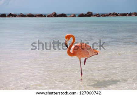 Pink flamingo standing in one leg - stock photo