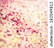 Pink flower background close up  - stock photo