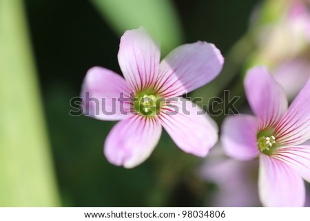 Pink flower field,high angle view - stock photo