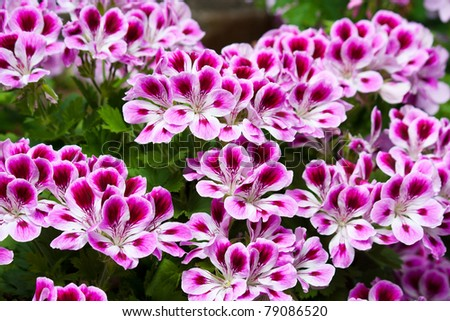 Pink flower in a park in uk. - stock photo