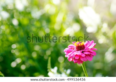pink flower in the garden