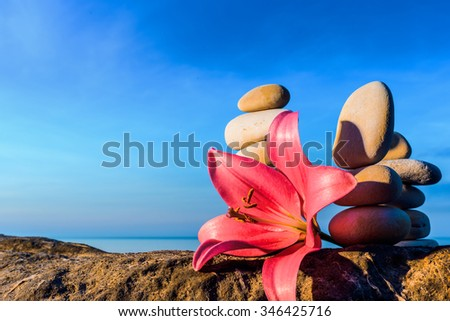 Pink flower of lily at stack of pebbles on the coast - stock photo