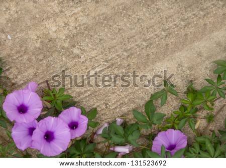 Pink flower on a concrete floor. - stock photo