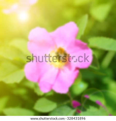 Pink flower on a green background: blurred effect - stock photo