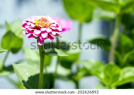 Pink flower on a pale blue background - stock photo