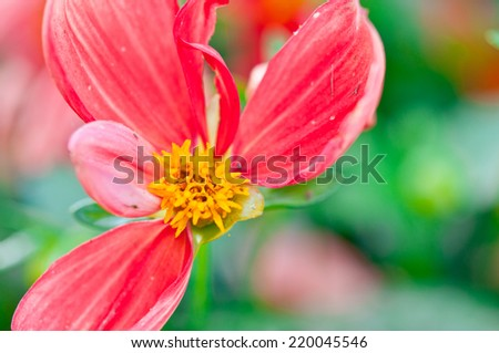 Pink flower petals, macro on flower, beautiful abstract background - stock photo