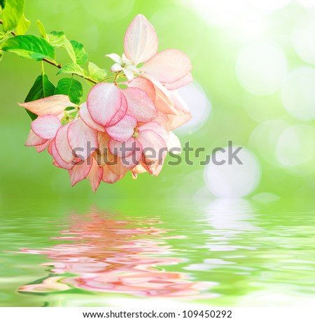 Pink flower reflected in water.