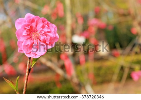 Pink flower use for background.Shallow DOF by wide aperture - stock photo