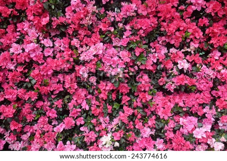 pink flower wall - stock photo