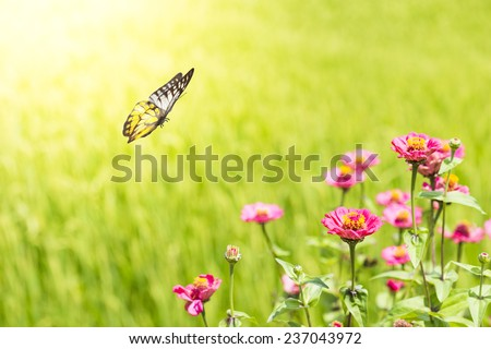 Pink Flower With Butterfly - stock photo