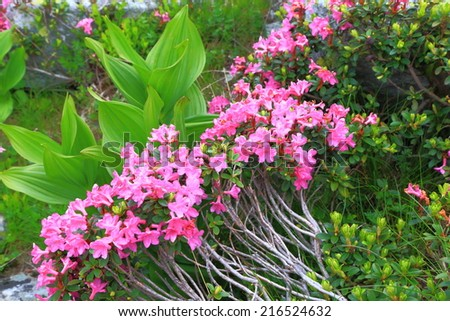 Pink flowers and green vegetation on the mountain - stock photo