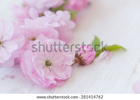 Pink flowers close-up on white wooden background - stock photo