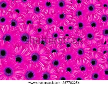 pink flowers field - stock photo