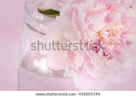 Pink Flowers in a glass vase, isolated against pink. - stock photo