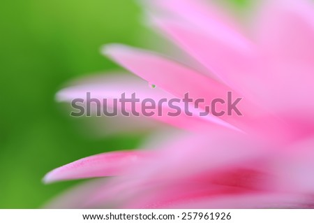 pink flowers in the garden - stock photo