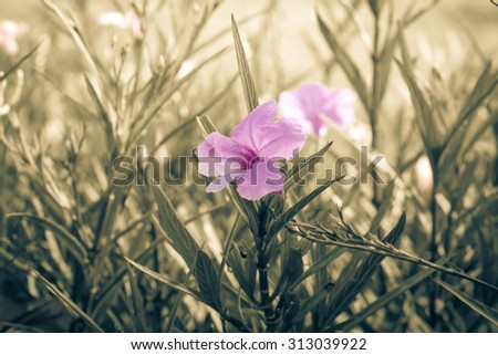Pink flowers in the garden, Retro tone - stock photo