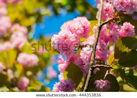 pink flowers in the lush spring garden - stock photo