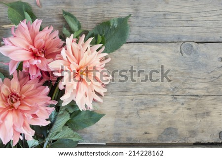 Pink Flowers on Wooden Background - stock photo