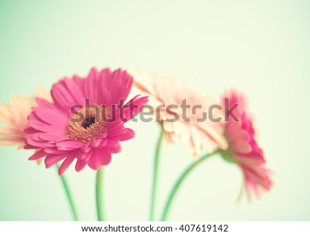 Pink flowers over mint background