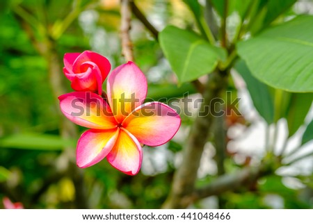Thitiwat Chirayutwibul S Portfolio On Shutterstock