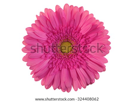 Pink gerber flower isolated on white background - stock photo