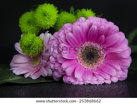 pink gerbera flowers on the black background with leaves and tulips and reflection - stock photo