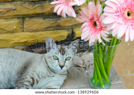 Pink Gerbera with tabby cat