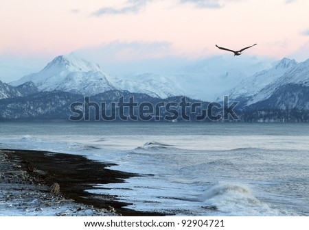 Pink glow of sunset on an Alaskan beach in winter with a flying eagle and mountains in the background. - stock photo