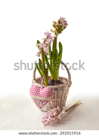 Pink hyacinth in a white basket on a white background with shadow - stock photo