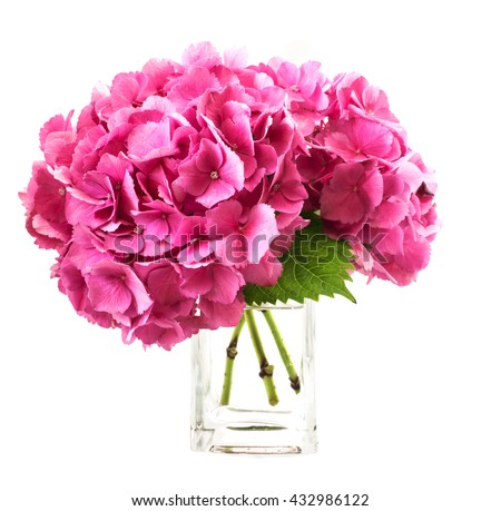 pink hydrangea inside glass vase over white