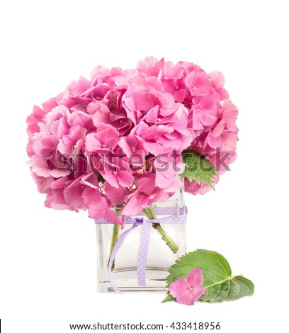 pink hydrangea luxuriant bunch inside glass vase over white