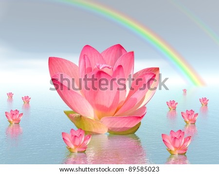 Pink lily flowers on water and under rainbow by beautiful weather - stock photo