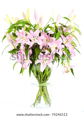 Pink lily flowers on white background - stock photo