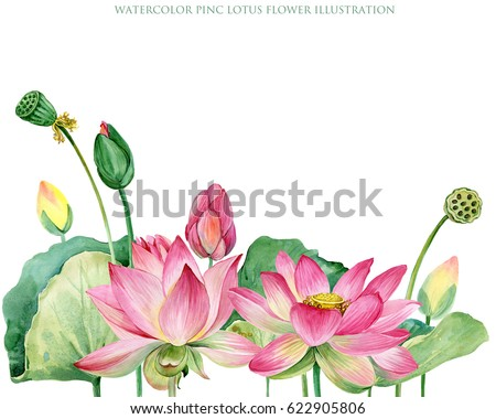 Lotus Purple Stock Images Royalty Free Images Vectors Shutterstock