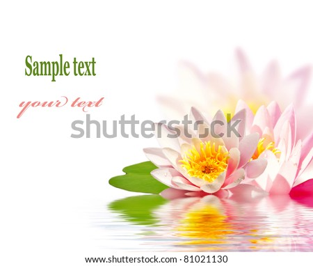 Pink lotus flower floating in water - stock photo