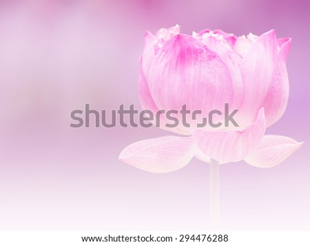 Pink lotus flower buddhism on soft stock photo royalty free pink lotus flower of buddhism on soft color and filter mightylinksfo