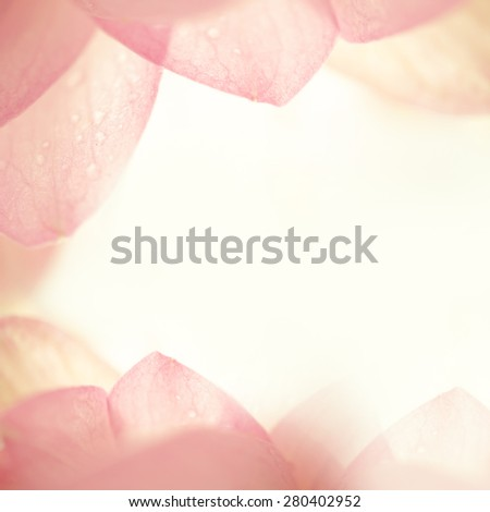 pink lotus in soft color and blur style - stock photo