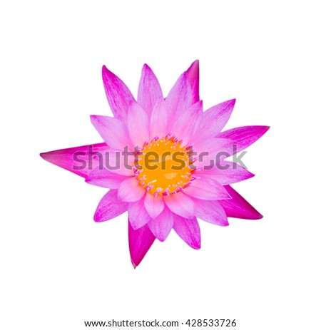Pink lotus or water lily with yellow petal and water isolate with clipping path - stock photo