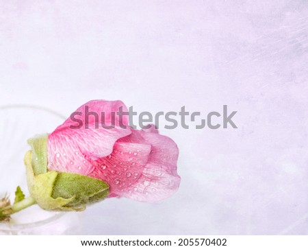 Pink mallow (Malva) in crystal glass on grunge background - stock photo