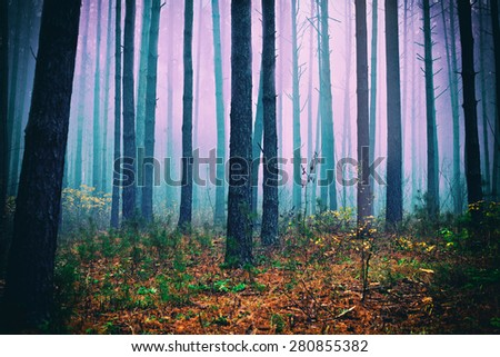 Pink mist in pine forest - stock photo