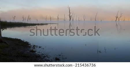 Pink Misty Morning with Drowned Trees at Lake Tinaroo - stock photo