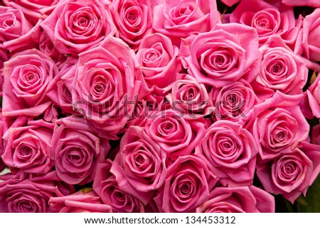 pink natural roses background - stock photo