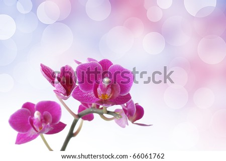 Pink orchid against bokeh background