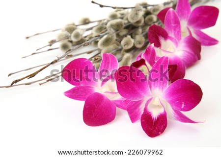 Pink orchid and willow - stock photo